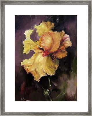 Iris Gold Framed Print