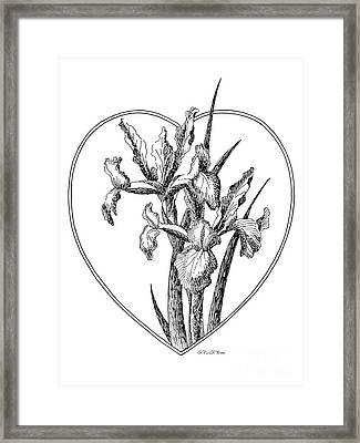 Iris Heart Drawing 3 Framed Print