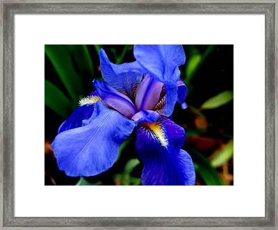 Iris II Framed Print by James Granberry
