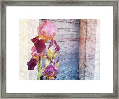 Iris In A Doorway Framed Print by Antique Images
