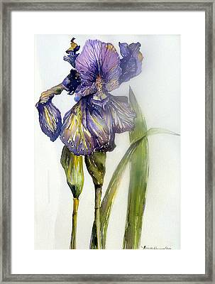 Iris In Bloom Framed Print by Mindy Newman