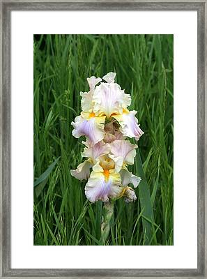 Iris In Grass Framed Print by George Ferrell