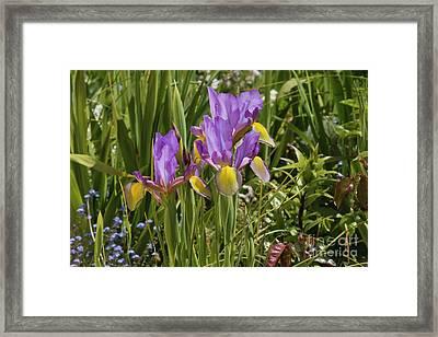 Iris In My Garden Framed Print by Terri Waters
