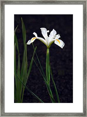 Iris In My Glory Framed Print by James Steele