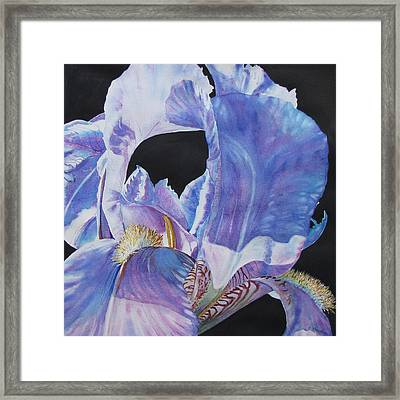 Iris-in-provence Framed Print by Nancy Newman