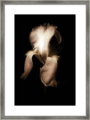 Iris In Sepia Framed Print