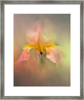 Iris In The Pink Framed Print by David and Carol Kelly