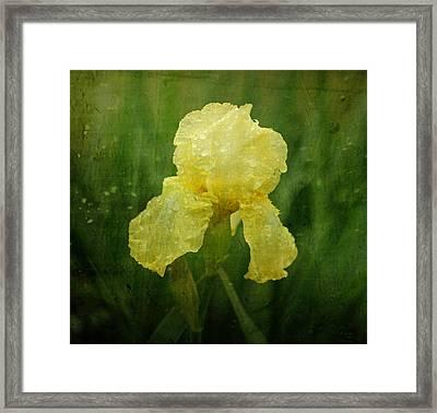 Iris In The Rain Framed Print by Sandy Keeton