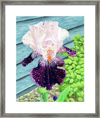 Iris In The Spring Rain Framed Print