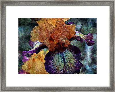 Iris Intimacy Framed Print by Angelina Vick