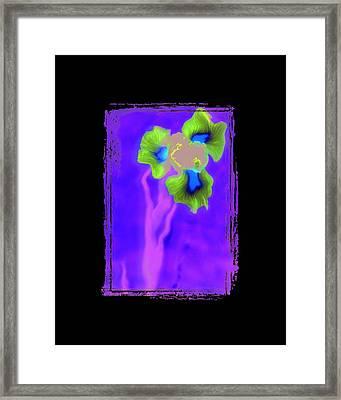 Iris Framed Print by K Randall Wilcox