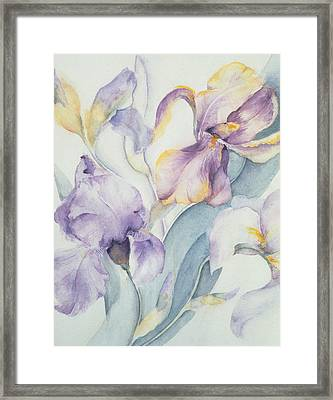 Iris Framed Print by Karen Armitage