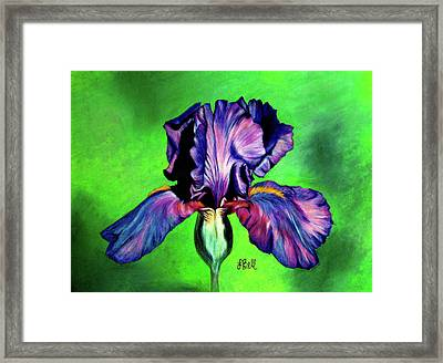 Iris Framed Print by Laura Bell