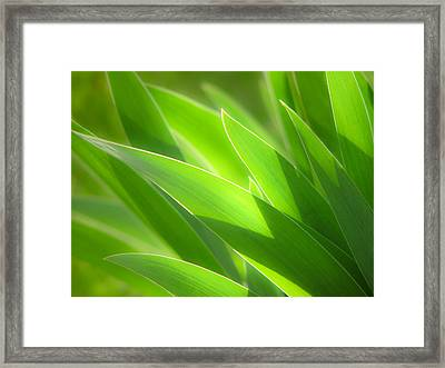 Iris Leaves Framed Print