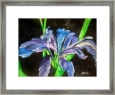 Framed Print featuring the painting Iris by Lil Taylor