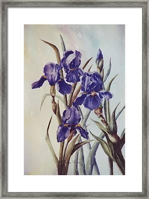 Iris Framed Print by Lynne Parker
