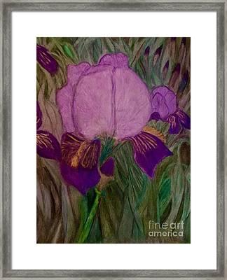 Iris - Magic Man. Framed Print