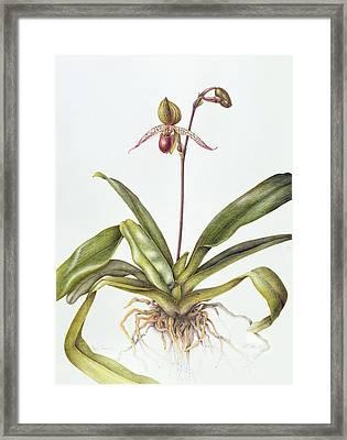 Iris Framed Print by Margaret Ann Eden