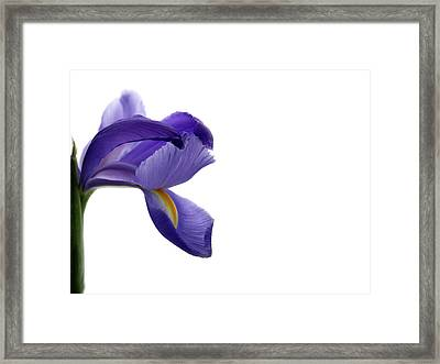 Framed Print featuring the photograph Iris by Marie Leslie