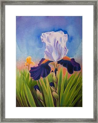 Iris Morning Framed Print