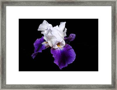 Iris Number One Framed Print