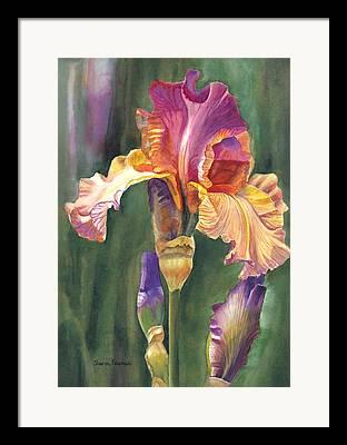 Purple. Iris. Buds Framed Prints