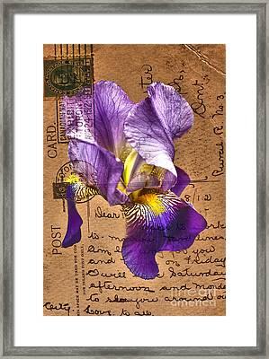 Iris On Vintage 1912 Postcard Framed Print