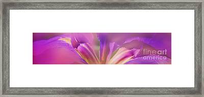 Iris Panorama Framed Print