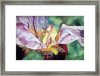 Iris Passion 1993 Framed Print