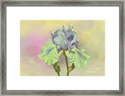 Iris Pastels Framed Print