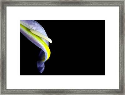 Framed Print featuring the photograph Iris Petal by Elsa Marie Santoro