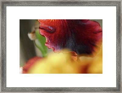 Iris Petals 2 -  Framed Print