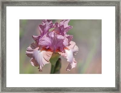 Iris Pond Lily. The Beauty Of Irises Framed Print by Jenny Rainbow