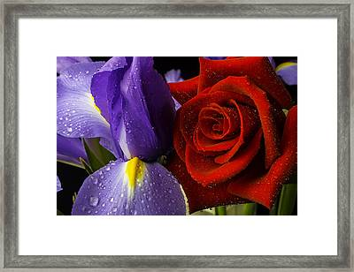 Iris Rose Framed Print by Garry Gay