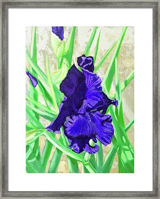 Iris Royalty Framed Print
