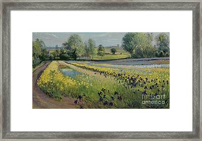 Iris Slope Framed Print by Timothy Easton