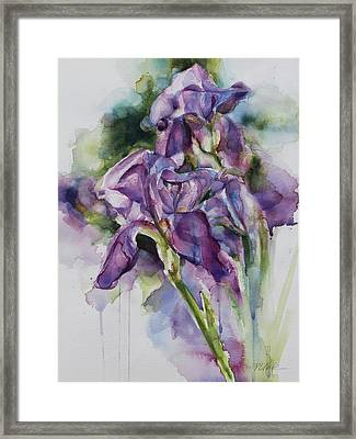 Iris Song Framed Print
