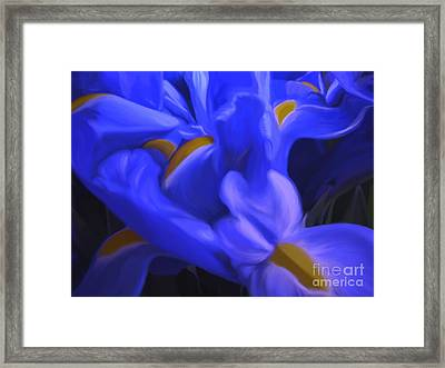 Iris Sparkle Framed Print by Roxy Riou