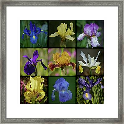 Iris Spring 2017 Collection Framed Print by Richard Cummings