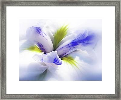 Iris Spring Framed Print by Jessica Jenney