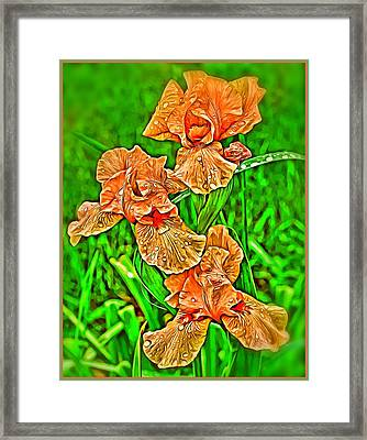 Iris Spring Framed Print by Mindy Newman