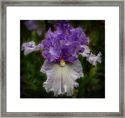 Framed Print featuring the photograph Iris Standout by Jean Noren