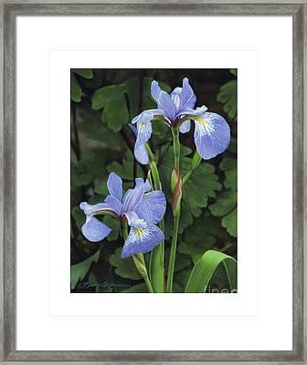 Iris Study Framed Print by Bruce Morrison