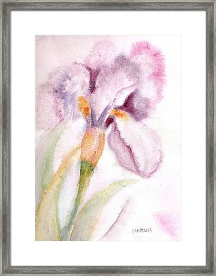 Iris Study I Framed Print