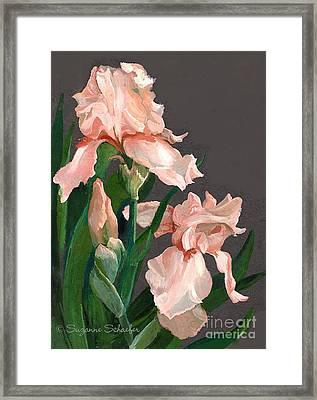 Iris Study Framed Print by Suzanne Schaefer