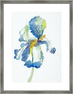 Iris Framed Print by Tina Storey