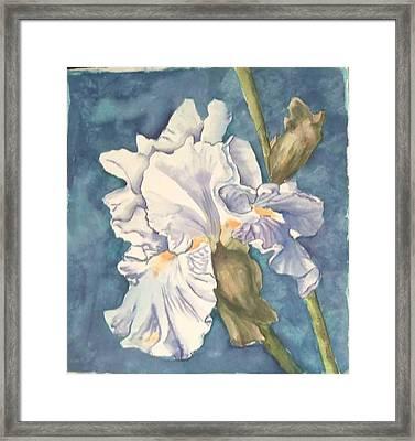 Iris Twenty One Framed Print