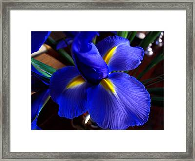 Framed Print featuring the photograph Iris Unfolding by Paul Cutright