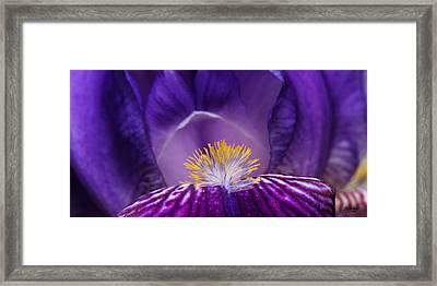Iris Upclose Framed Print