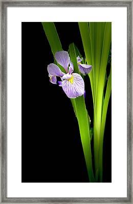Framed Print featuring the photograph Iris Via Iphone by Onyonet  Photo Studios